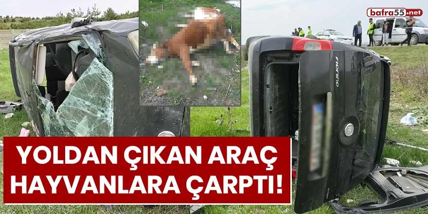 Yoldan çıkan araç hayvanlara çarptı!
