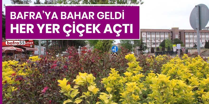 Bafra'ya bahar geldi, her yer çiçek açtı
