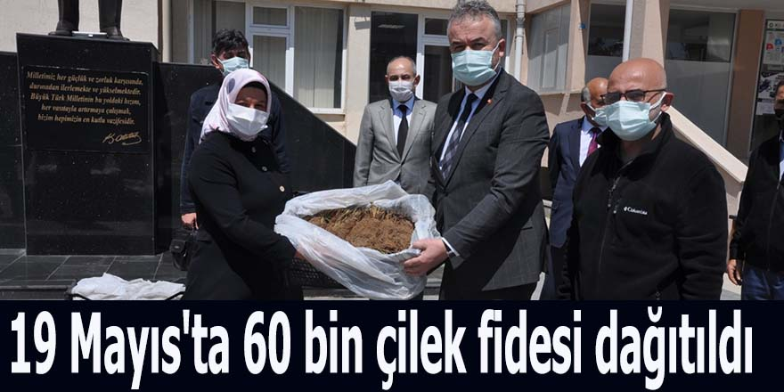 19 Mayıs'ta 60 bin çilek fidesi dağıtıldı