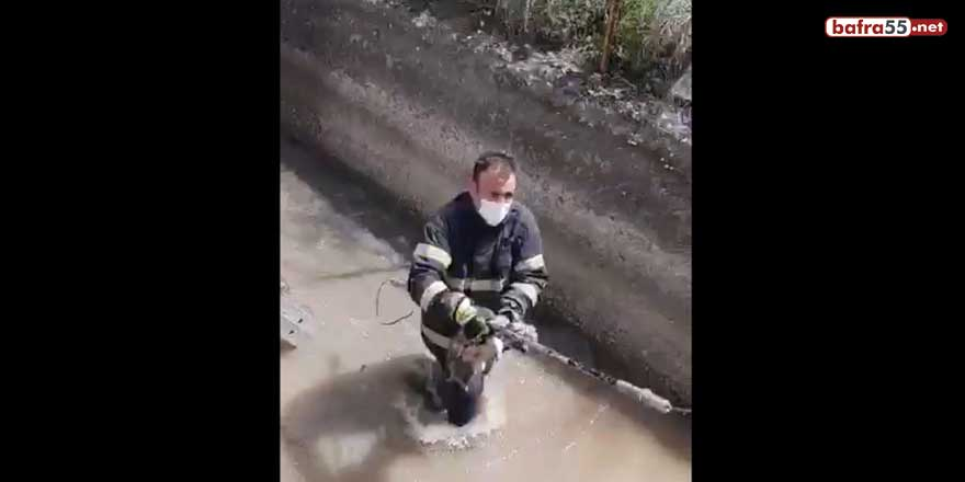 Irmakta boğulmak üzere olan yavru köpeği itfaiye kurtardı