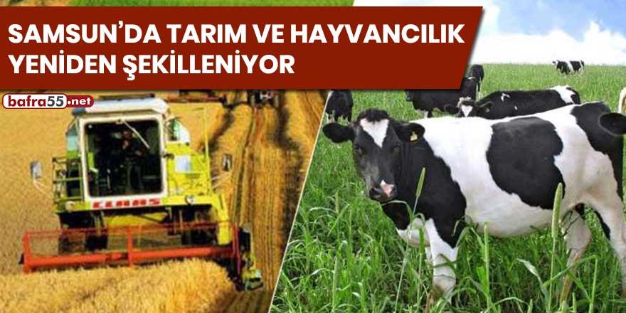 Samsun'da tarım ve hayvancılık yeniden şekilleniyor