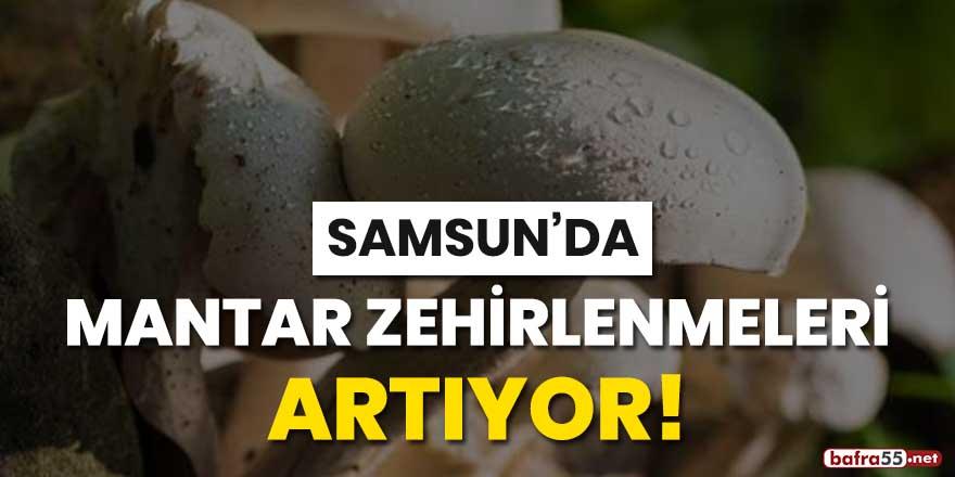 Samsun'da mantar zehirlenmeleri artıyor!