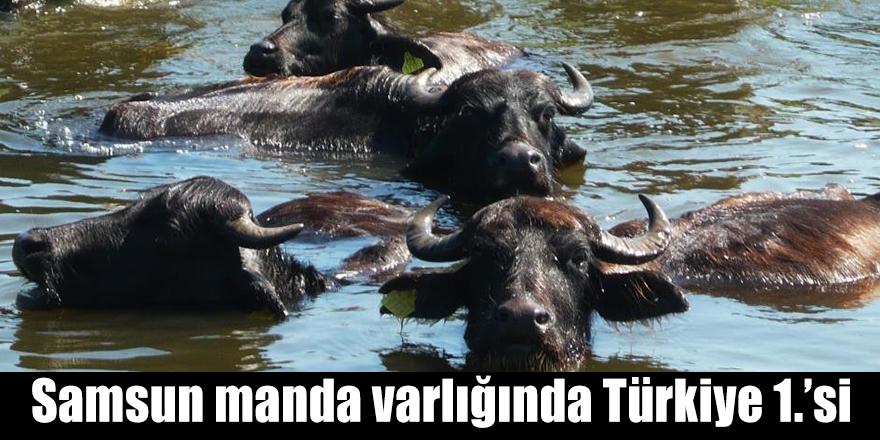 Samsun manda varlığında Türkiye 1.'si