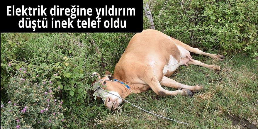 Elektrik direğine yıldırım düştü inek telef oldu