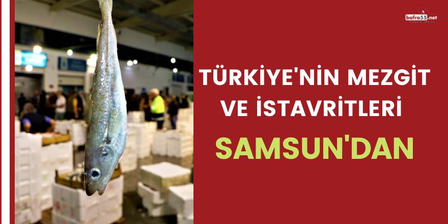 Türkiye'nin mezgit ve istavritleri Samsun'dan