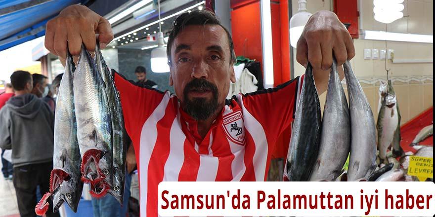 Samsun'da Palamuttan iyi haber