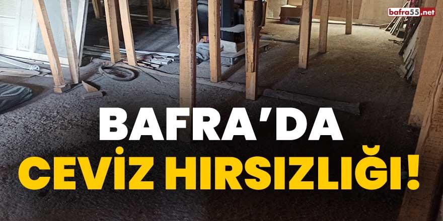 Bafra'da ceviz hırsızlığı