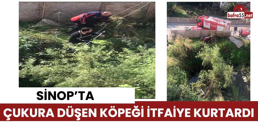 Sinop'ta su dolu inşaat çukuruna düşen köpeği itfaiye kurtardı