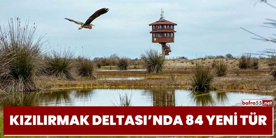 Kızılırmak Deltası'nda 84 yeni tür