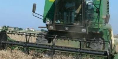 Bafra,da buğday hasat başladı