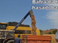 Bafra ilçesinde buğday hasadı başladı.