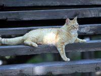 Kedi kasabasına  yeni misafir