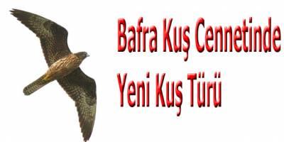 Bafra Kuş Cennetinde Yeni Kuş Türü