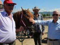 Çarşambada rahvan at yarışları