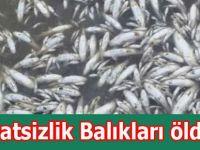 Dikkatsizlik Balıkları öldürdü