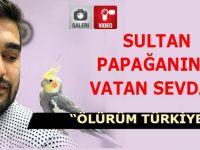Sultan Papağanının Türkiye Sevdası
