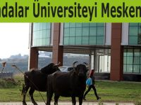 Mandalar Üniversiteyi Mesken Tuttu