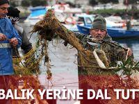 BALIK YERİNE DAL TUTTULAR