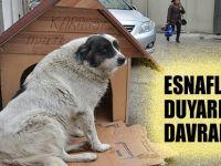 Esnaf'dan Sokak Köpeğine Kulübe