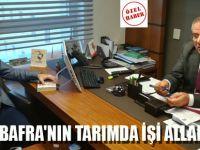 ZEYBEK BAFRA'NIN TARIMDA İŞİ ALLAHA KALDI
