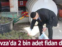 Havza'da 2 bin adet fidan dağıtıldı