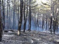 Boyabat'da Orman Yangını
