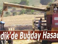Ladik'de Buğday Hasadı