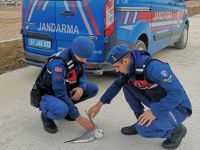 Jandarmadan Yaralı Martıya Yardım