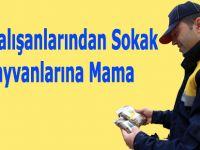 PTT Çalışanlarından Sokak Hayvanlarına Mama