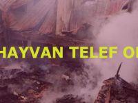Alaçam'da Samanlık Yandı 30 Hayvan Telef Oldu