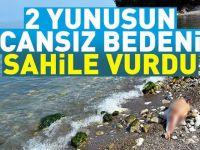 2 Yunusun cansız bedeni sahile vurdu