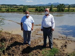 Bafra Ovasında Zarar Gören Çeltik Üreticileri Devlet'ten Yardım Bekliyor - 2