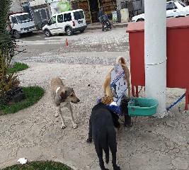alacam-belediyesi-ac-kalan-sokak-hayvanlarina-unutmadi-001.jpg
