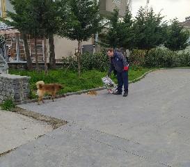 alacam-belediyesi-ac-kalan-sokak-hayvanlarina-unutmadi-002.jpg