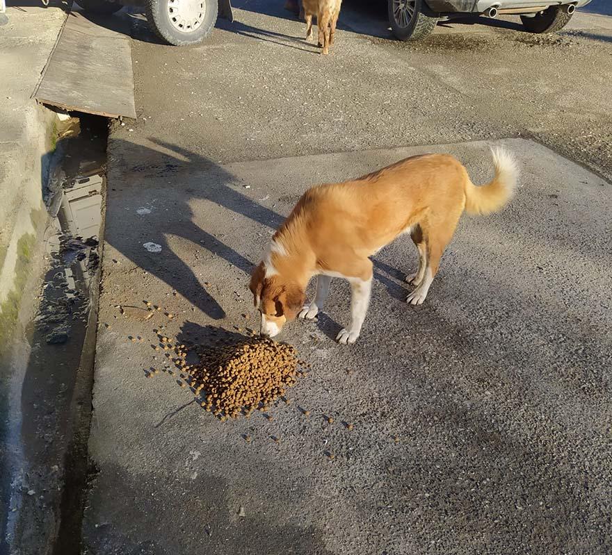 alacam-belediyesi-sokak-hayvanlarina-yem-birakti-2.jpg