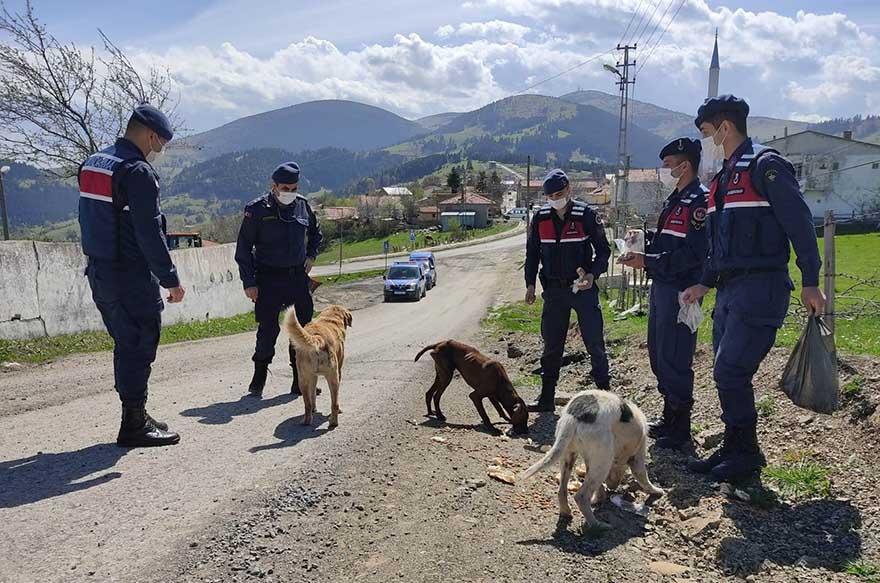 alacamda-ac-kalan-sokak-hayvanlarini-jandarma-besliyor-2.jpg