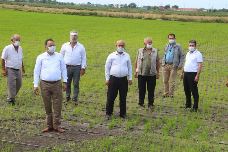 Bafra'da 42 Aile Damla Sulama Sistemi İle Çeltik Ekiyor