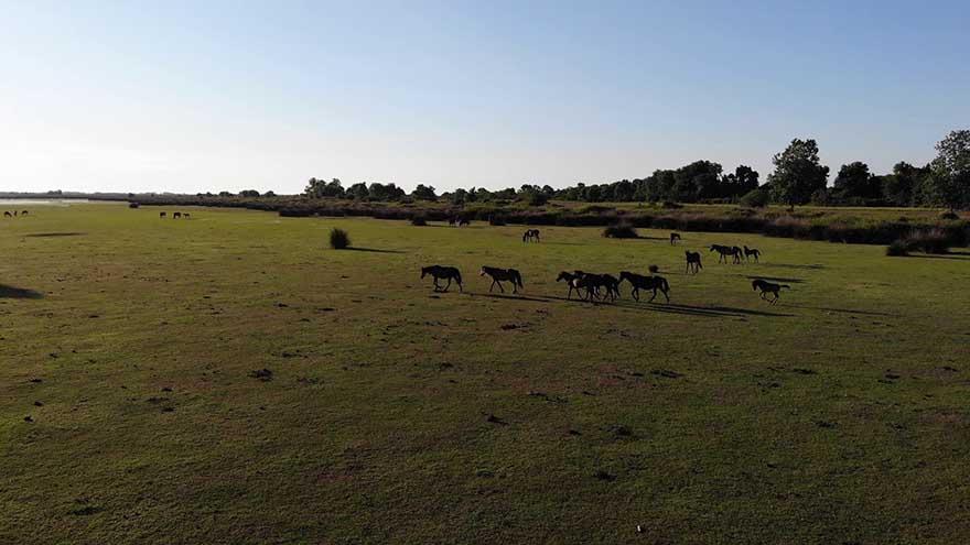 kus-cennetinde-bulunan-yilki-atlarindan-gorsel-solen-2.jpg