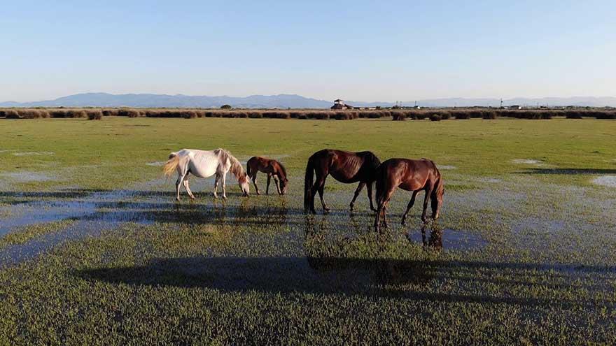 kus-cennetinde-bulunan-yilki-atlarindan-gorsel-solen-3.jpg