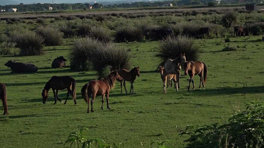 kus-cennetinde-bulunan-yilki-atlarindan-gorsel-solen-4.jpg