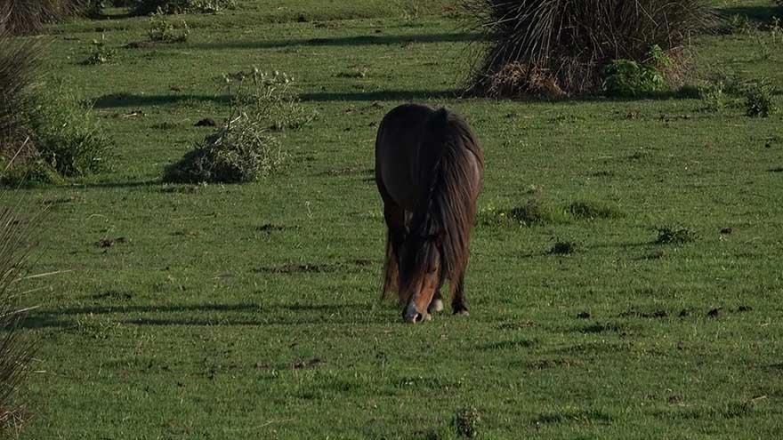 kus-cennetinde-bulunan-yilki-atlarindan-gorsel-solen-5.jpg