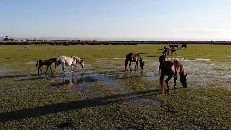 kus-cennetinde-bulunan-yilki-atlarindan-gorsel-solen-6.jpg