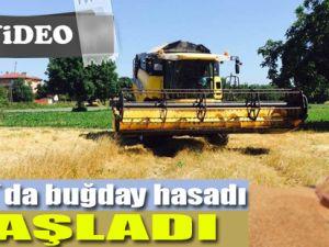 Bafra`da buğday alımı ve hasadı başladı
