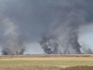Alaçam'da sazlık yangını